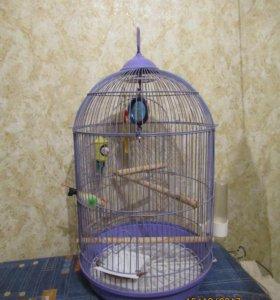 клетка для попугайчиков