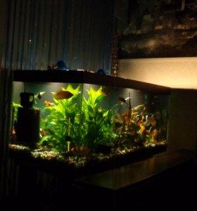 Аквариум,грунт,декор,растения,рыбы