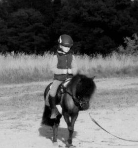 Лошадь. Верховая езда.