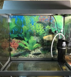 Продам аквариум + рыба (цихлида)