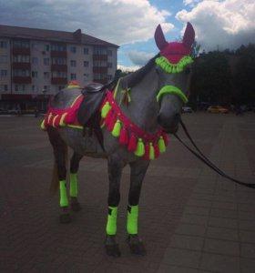 Набор на лошадь