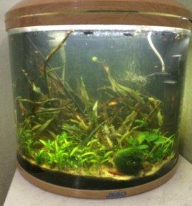 Продам аквариум (полусфера)