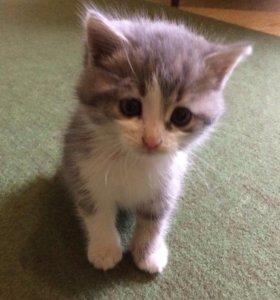 Котёнок-мальчик