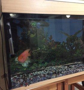 Аквариум 150 л с рыбкой «попугай»