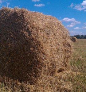 Солома. Овсяная, ржаная ,пшеничная.