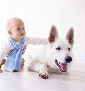 Новогодние фотосессии с щенком