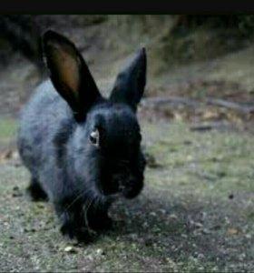 Проста отдаю кролика