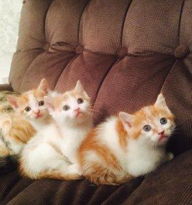 Отдадим котят в заботливые руки