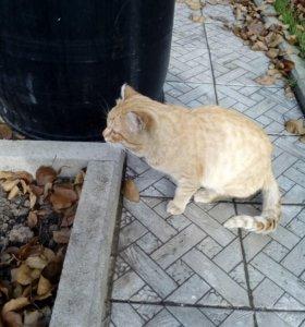 Рыжий кот и серая кошка