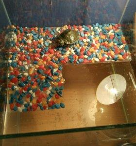 Срочно продам черепаху+ аквариум