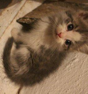 Котяточки-лапочки