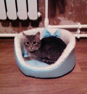 Кот в ижевске сколько стоит