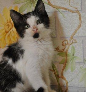 Котёнок Бородулька