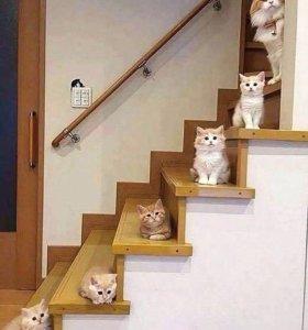 Монтаж и изготовление лестницы