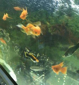 Различные рыбки