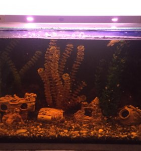 Аквариум 120 литров (рыбки,грунт,растения,домики)