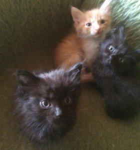 Котята ищут своих заботливых хозяев!