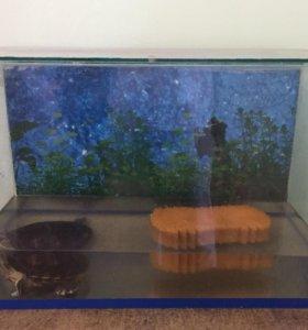 Аквариум 60 литров (с черепахой)