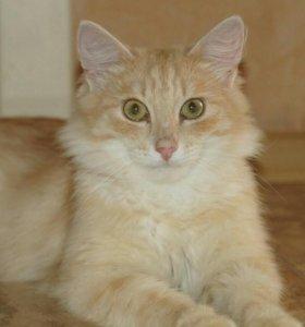 Ласковый котик Изя