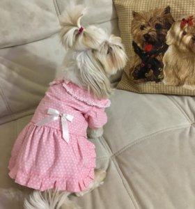 Платья на маленькую собачку (L, 25-27см)