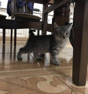 Два котёнка, девочки Соня и Лара