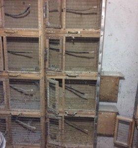 Клетки для попугаев , канареек