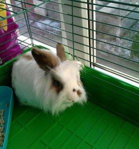 Кролик Тишка