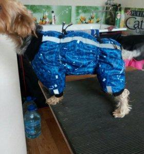 ЗооАтелье,одежда для собак.