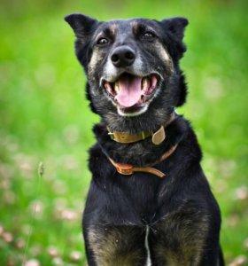 Дуся,8 лет. собака для души для любой семьи. В дар