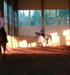 Спорт.Лошади.