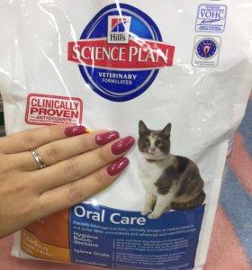 Hill's oral care