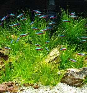 Продам аквариумные растения, рыбок, креветок