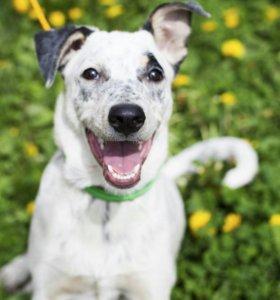 Собака в добрые руки (привита и стерилизована)