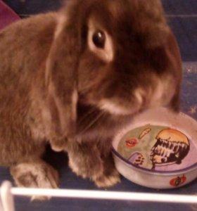 Кролик с большой клеткой)))