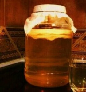 Чайная медуза.