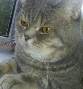 Кот.Вязка.