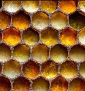 Мёд оптом и в розницу !!