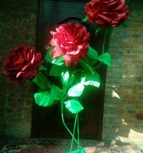 Ростовые цветы для фотосессии