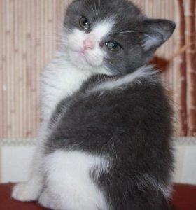 Прелестный котик