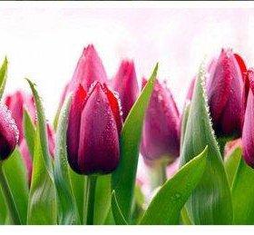 Кухонный фартук тюльпаны 3м