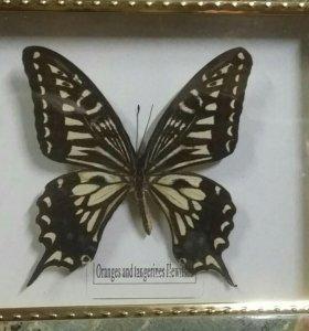 Панно бабочка.