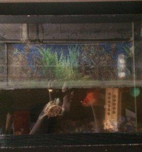 Аквариум с черепахой и рыбами