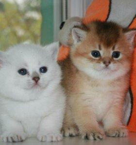 Кошечки с фиалковыми глазами