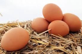 Продам яйцо куринное домашнее
