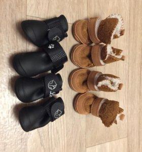 Обувь и одежда для собак