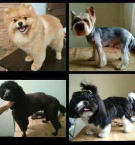 Стрижка собак и кошек.Груминг