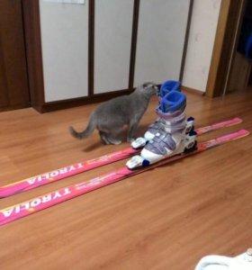 Горные лыжи TYROLIA+ ботинки NORDICA VERTECH