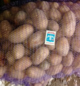 Картофель 20рублей без гербицыдов
