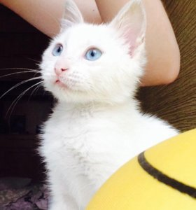 Котёнок девочка в добрые руки