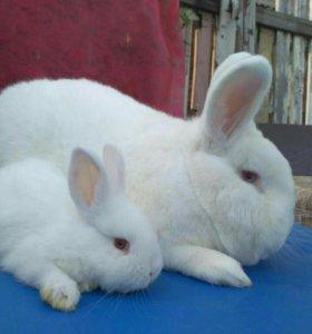 Крольчата НЗБ